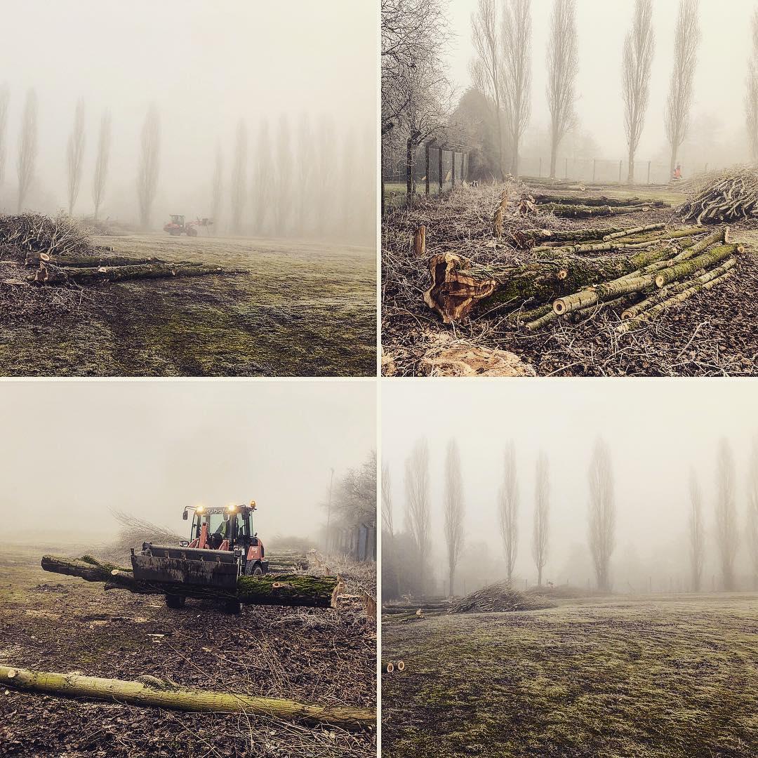 Paysagiste Jardinier Oise Beauvais Compiegne Chantilly Senlis Creil - abattage élagage arbres - Gaudion Paysage