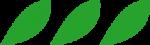 pétale vert foncé